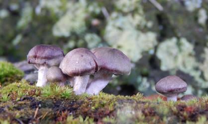 Little Brown Mushrooms by joyandsoul