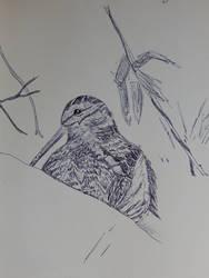 Woodcock by joyandsoul