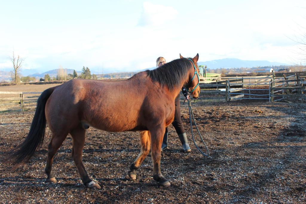 Quarter Horse by kaspizza