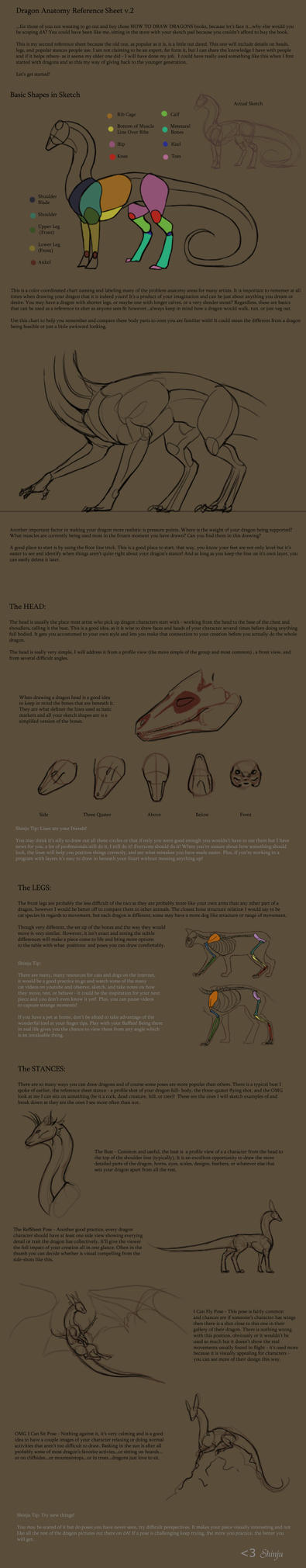 Dragon Anatomy RefSheet v. 02 by KyriaDori