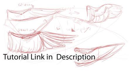 Bird Wing Anatomy Tutorial - Video by KyriaDori