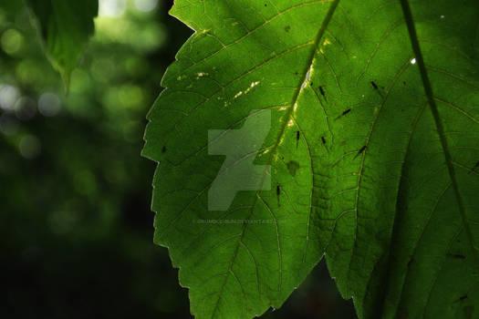 Leaves Close Up Shot