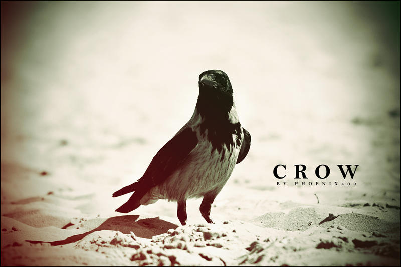 crow wallpaper images pictures becuo