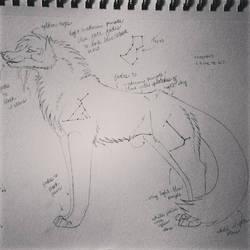 Lunar Lupine Sketch