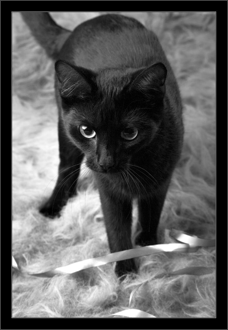 Black Cat by HelloFroggy