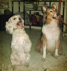 good dogies