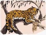Panthera nahuel bien manchada