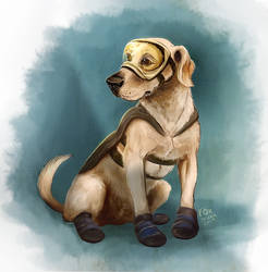 Hero-rescue dog S19
