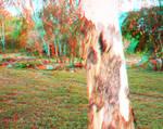 polo forest harnoi dam