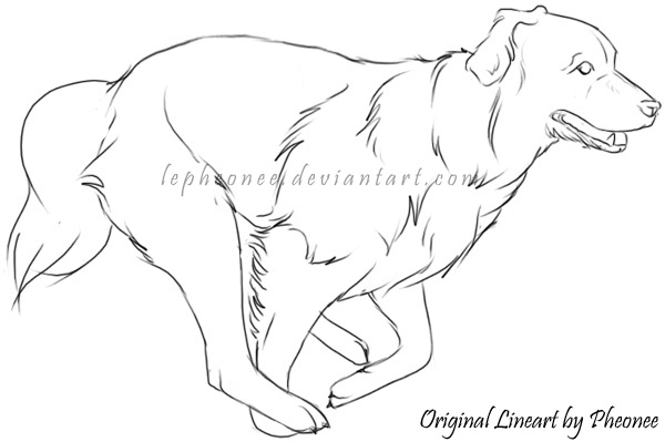 Line Drawing Golden Retriever : Golden retriever lineart by hawberries on deviantart
