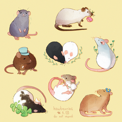 thinking about rats 24/7