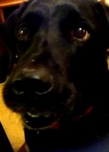 ravenwolf01329's Profile Picture
