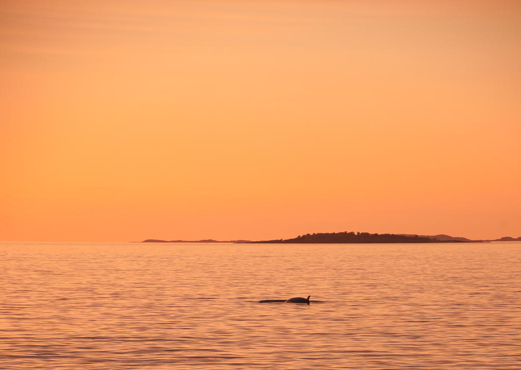 Whale Stock by Aredelsaralonde