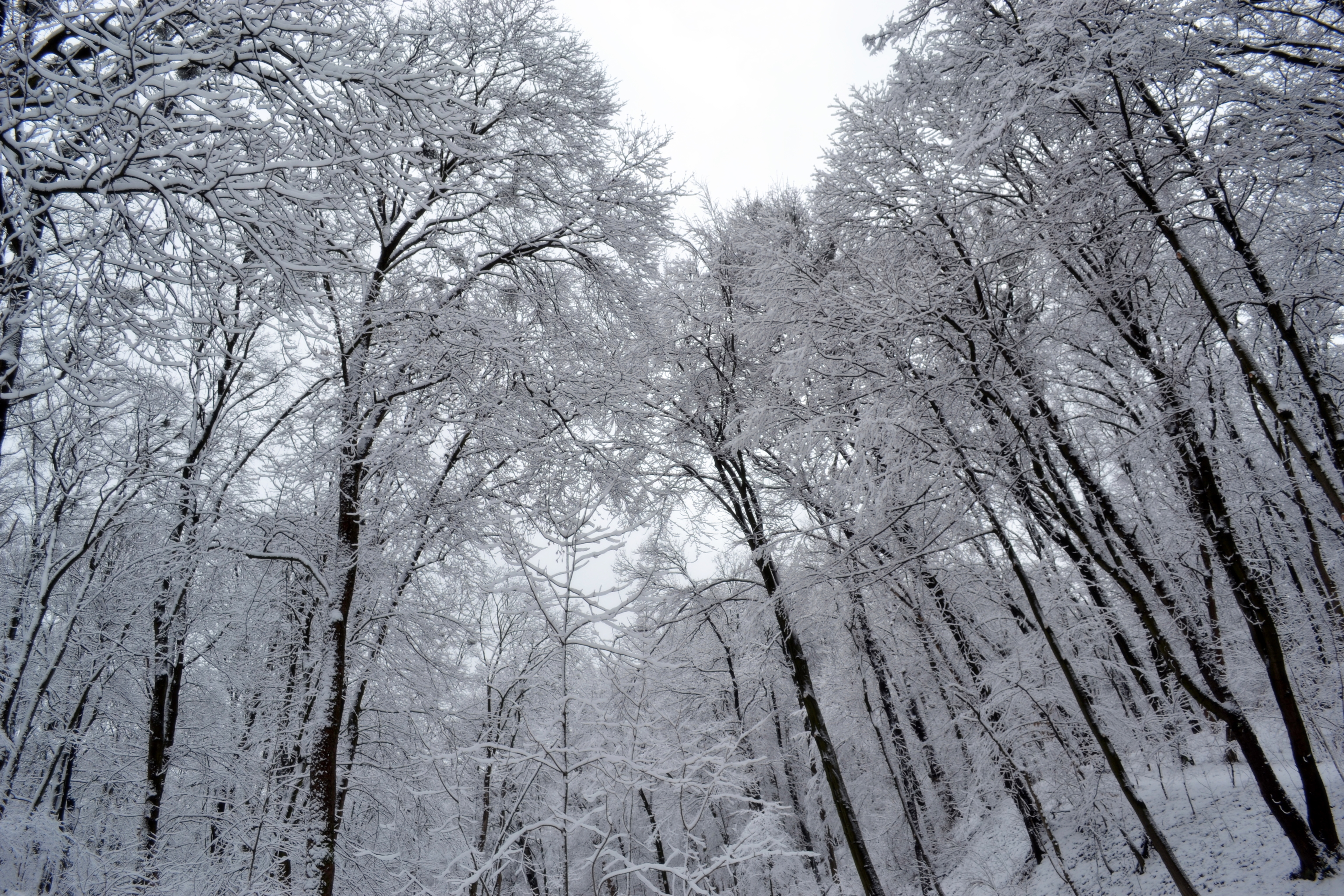 Trees In Snow By Ronin Vj On Deviantart Tree And Sno
