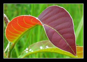 red leaf by chinlop