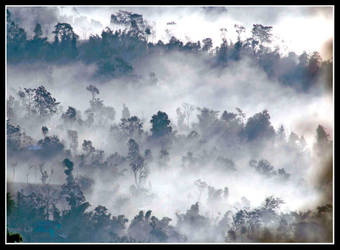 Fog and forests by chinlop