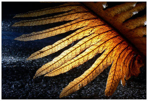 Dry fern.