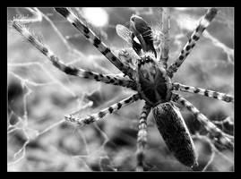 spider by chinlop