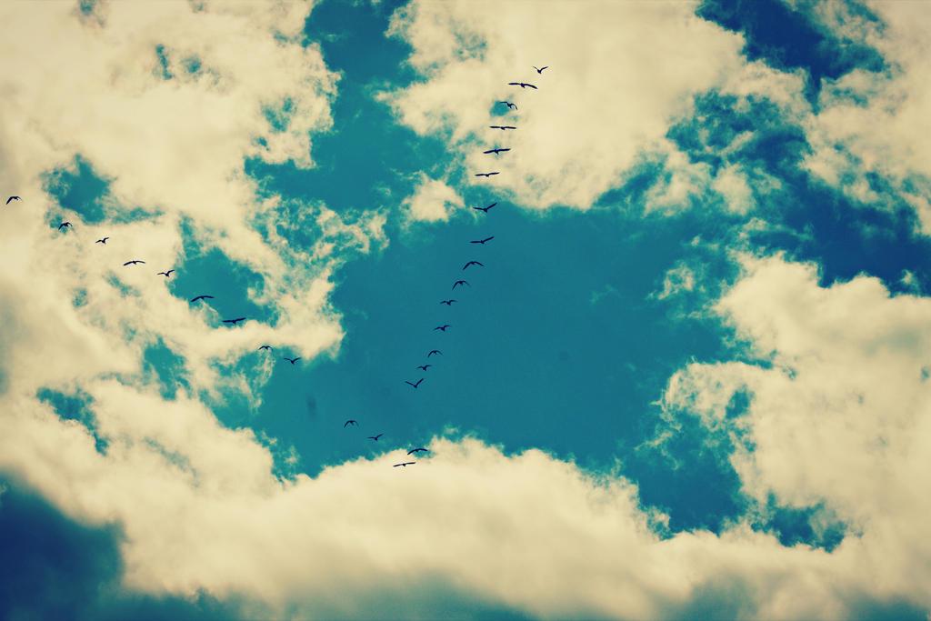 Freedom by lolnyny