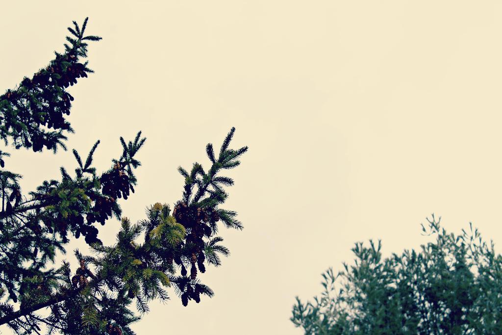 Winter Sky by lolnyny