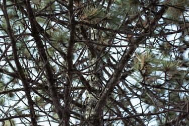 Branches by lolnyny