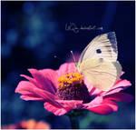 Nectar ...
