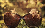 Sunglasses for Sunny Days