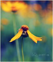 ... last Wings by LiiQa