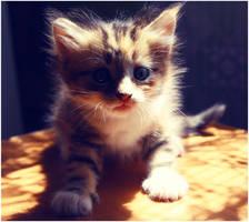 Little sunshine by LiiQa