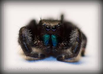 Spider by minininja77