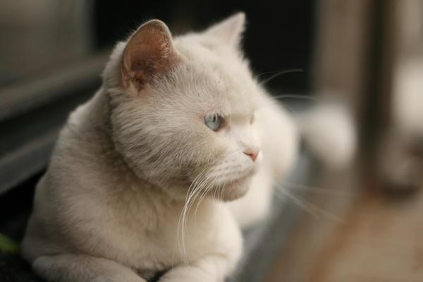 Cat by maharshi