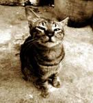 My Chinese Cat