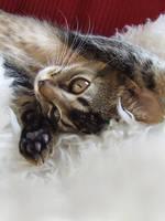 Sleepy Kitty by HiawathaPhoto
