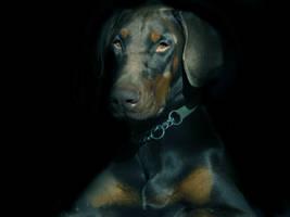Watchdog by HiawathaPhoto