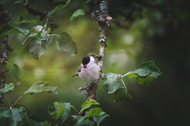 Small Bird In a Big World by HiawathaPhoto