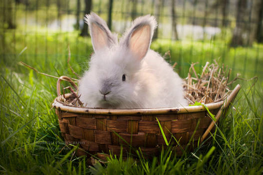 Cutie In A Basket