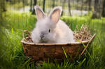 Cutie In A Basket by HiawathaPhoto
