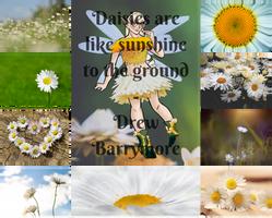 OPEN OTA: Daisy Fairy