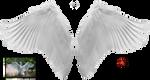 Wings 1 by AmonStock