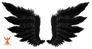 Wings 6
