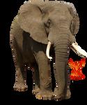 Elephant 2 by PhoenixRisingStock