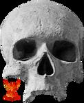Human Skull by PhoenixRisingStock