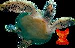 Sea Turtle by PhoenixRisingStock