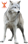 Artic Wolf by PhoenixRisingStock