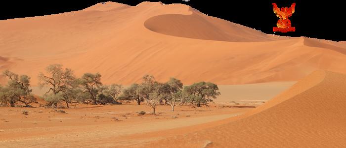Desert Sands 6