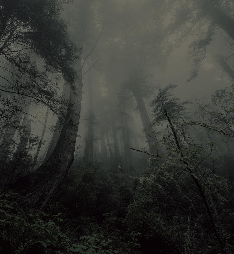 Haunted Forest 3