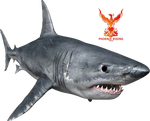 Great White Shark by PhoenixRisingStock