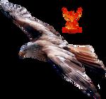 Eagle by PhoenixRisingStock