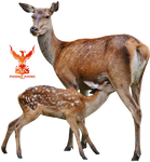 Deer by PhoenixRisingStock