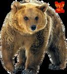 Grizzley Bear by PhoenixRisingStock